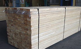 Chile Pine ACOL(5)